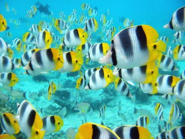 24 Colorful Examples Of Fish Photography Tropical Fish Sea Fish Fish Wallpaper