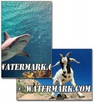 Create Visible Watermarks In Photoshop CS5