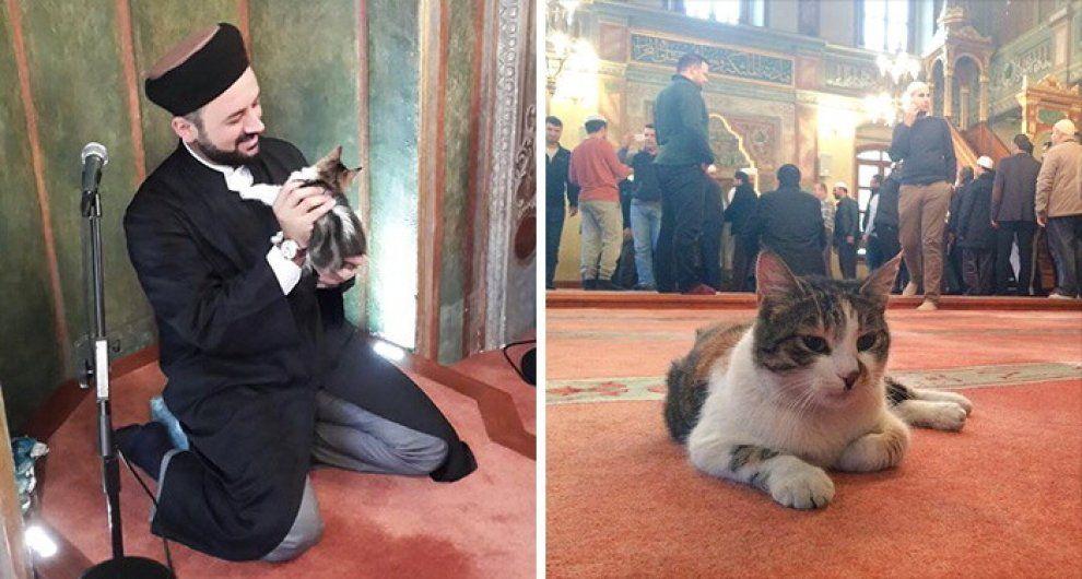 A Istanbul una moschea ha aperto le porte ai gatti. Si tratta del centro Aziz Mahmud Hüdayi, costruito nel 1594 dal sultanoAy?e Han?m, che durante i