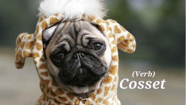 Cosset   Http://unusedwords.com/2012/10/02/cosset/  Http://unusedwords.com/wp Content/uploads/2012/10/Cosset Pronunciation:  KAHS It Definition: To Pamper ...