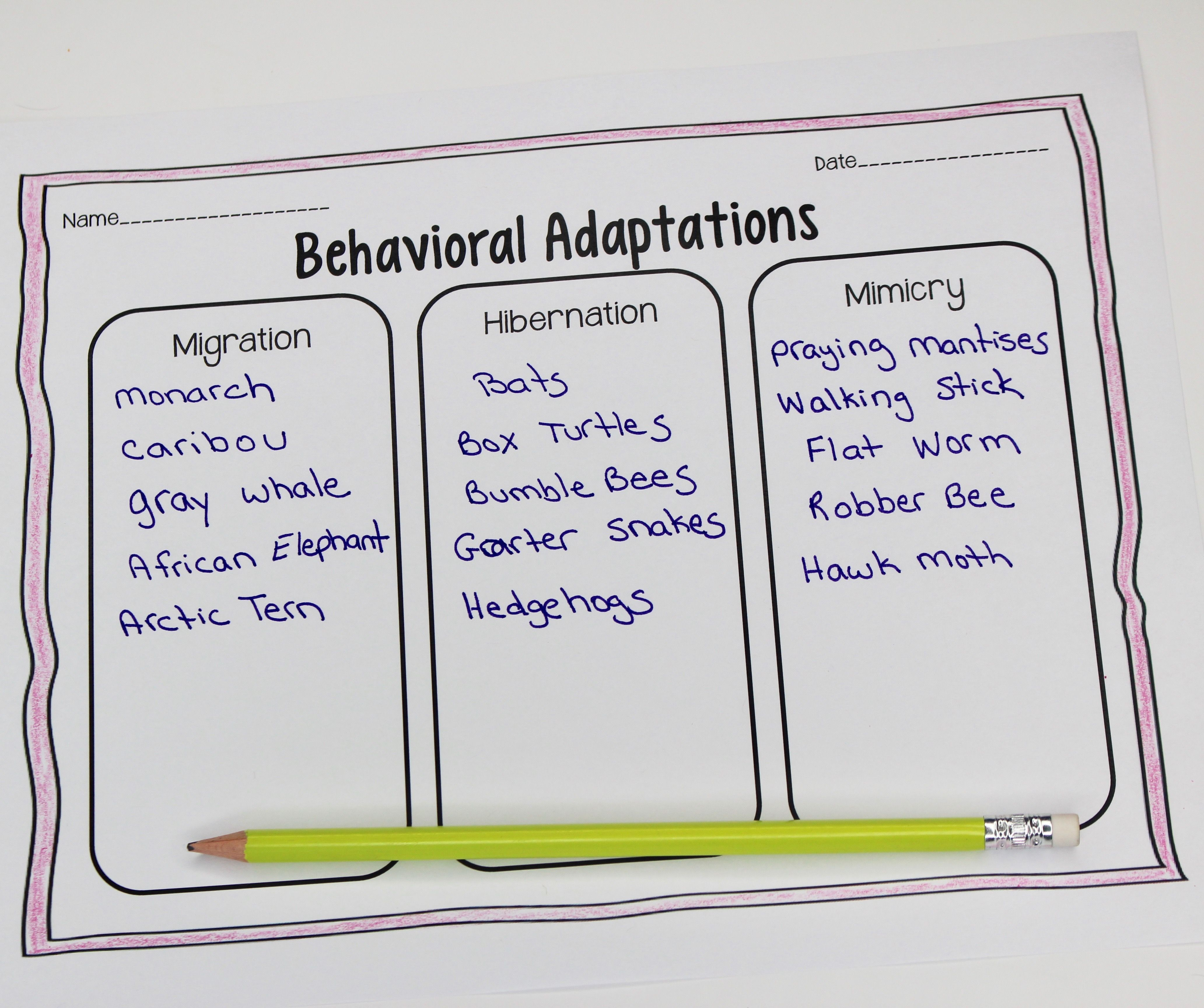 Animal Adaptations Lessons Amp Activities