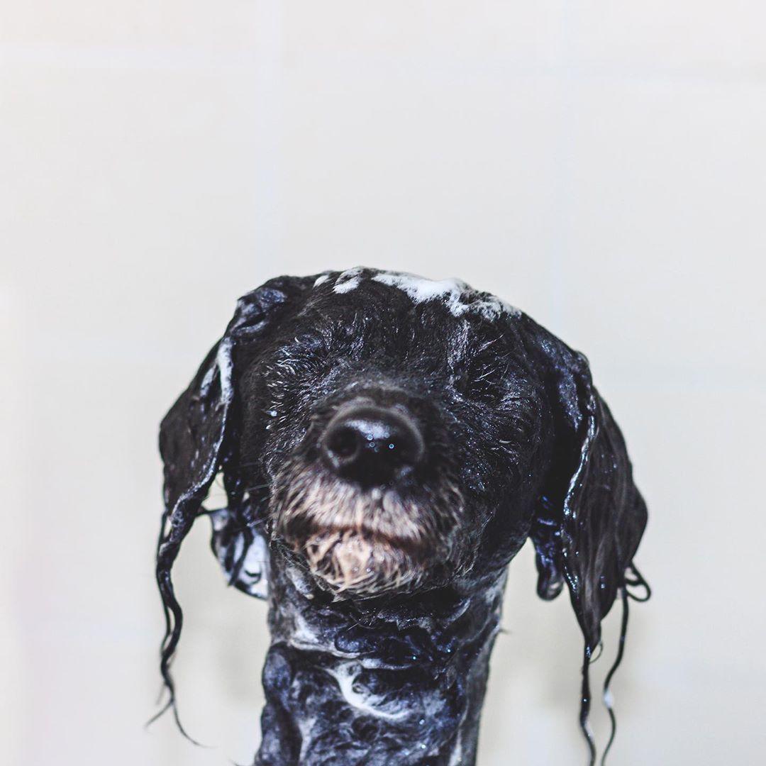 Tierschutz Dackelpolizei Wer Kann Helfen Heute War Quale Deinen Hund Tag Bei Meinen Zweibeinern Was Genau Das Bedeutet Den Doofohren Dogs Animals