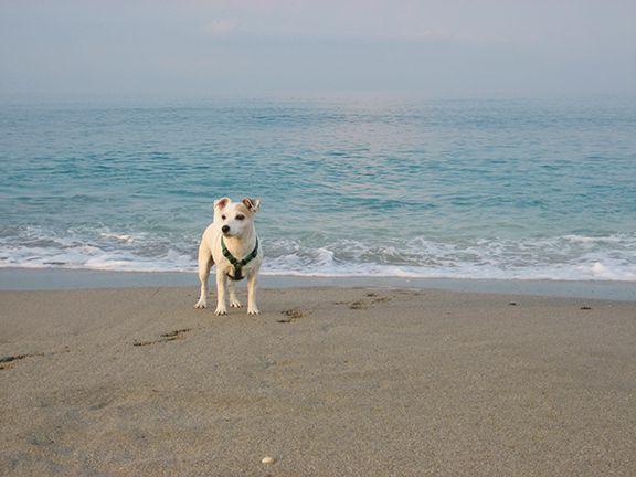 Favorite Dog Spot Jupiter Beach Florida Terrier Dogs Dogs Terrier