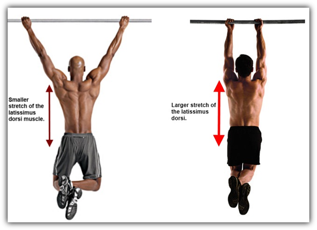 inverted row muscles worked - חיפוש ב-Google | PULLUPS-FIRST STEPS ...