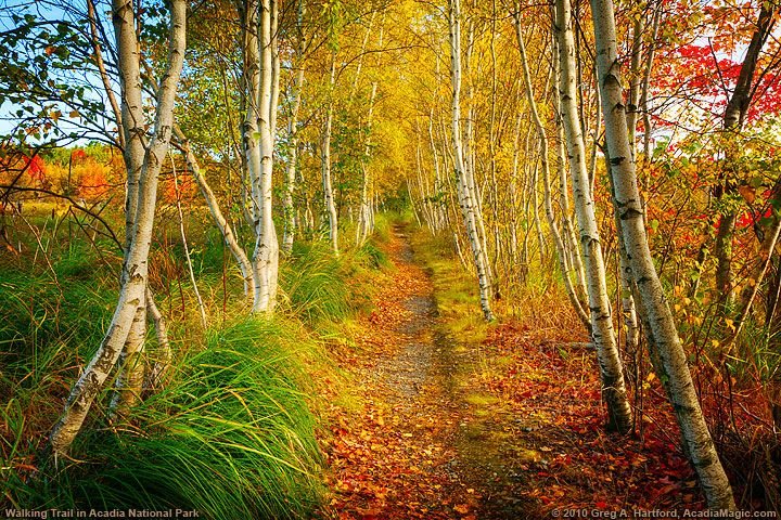 White Birch Hiking Trail in Acadia National Park, Maine