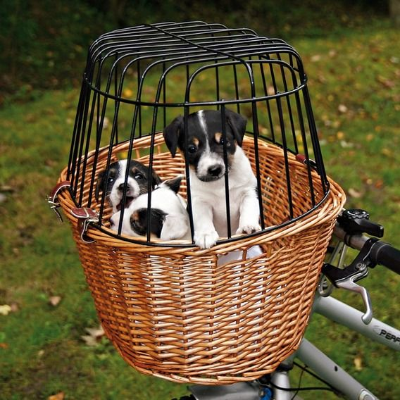 Awwwe - for a new litter to ride along... Friends on Tour Bicycle Basket 63b4a35ea4