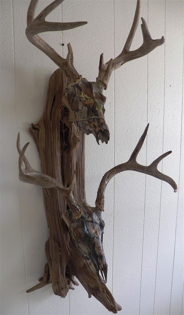 Deer skull mount ideas - Driftwood Wall Pedestal For Mounting Two European Mount Deer Skulls Instructions Mounting And Hanging Hardware Is Included