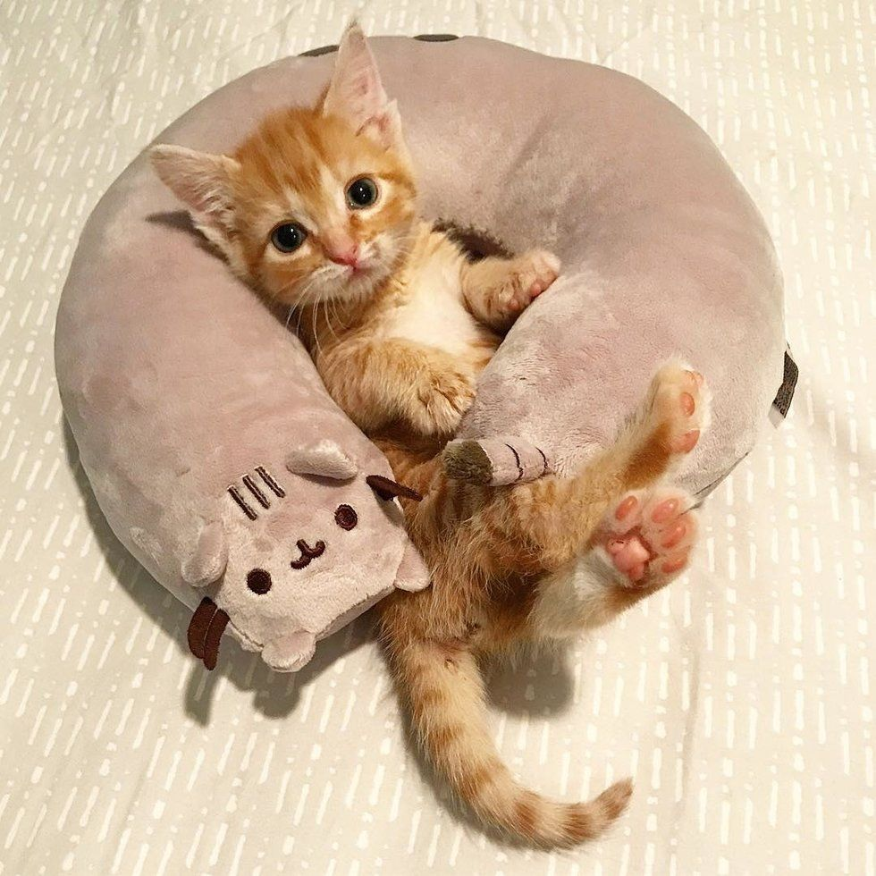 Two Months Ago Hannah Shaw Founder Of Kitten Lady Received A Phone Call From An Animal Control Officer About A Baby Kitt Cute Cat Gif Baby Animals Cute Cats