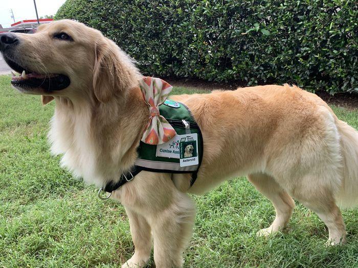 Alabama hospital hires golden retriever as facility dog