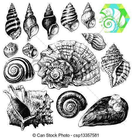 Pin En Scientific Illustration