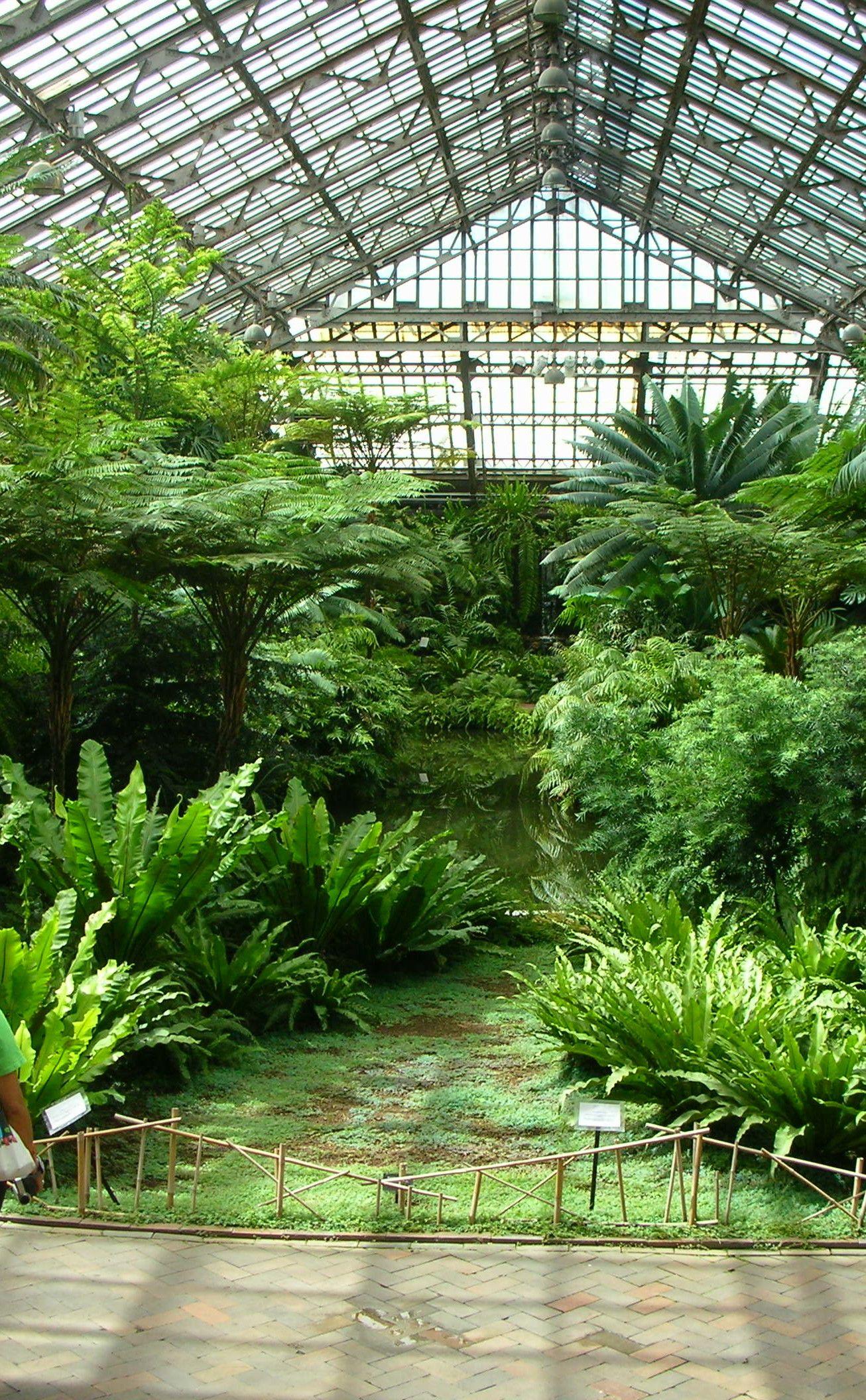 Garfield Park Conservatory Inside Garden Plant Aesthetic Tropical Garden Design
