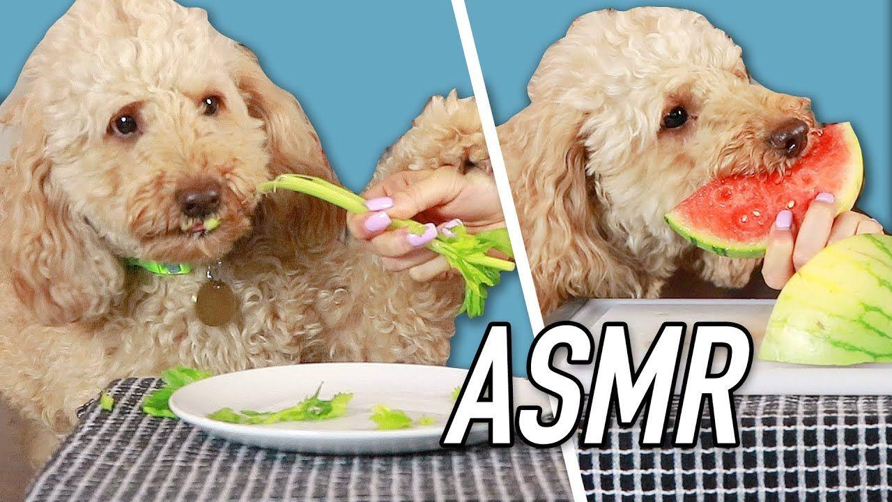 Dog Reviews Human Food Asmr Kelsey Impicciche Human Food Asmr