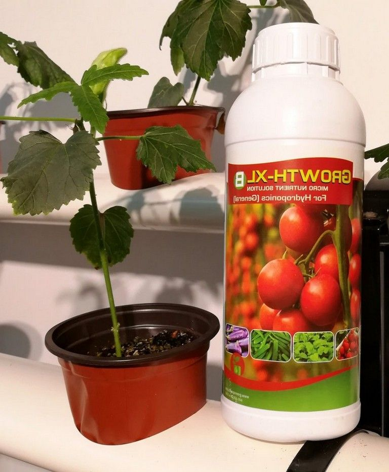 08+ How to innovative get bigger hydroponic tomatoes ...