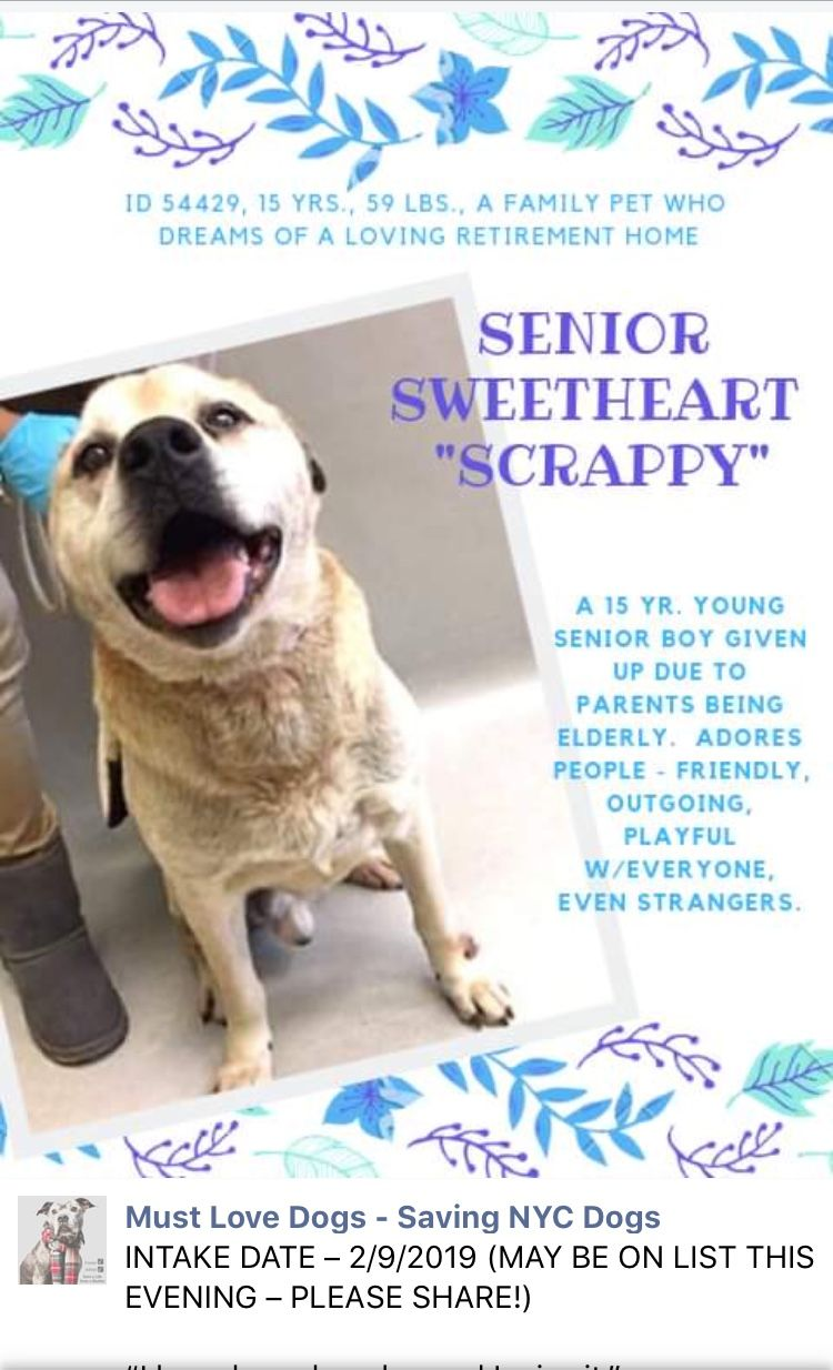 🆘🆘 15 YEAR YOUNG OWNER SURRENDER SCRAPPY LISTED TO DIE 2/14/19 AT