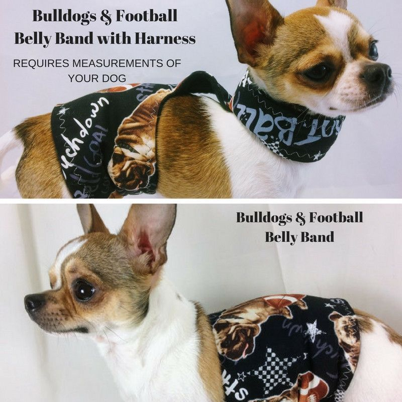 Football Bulldog Male Dog Belly Band Group One Dog Gallery With