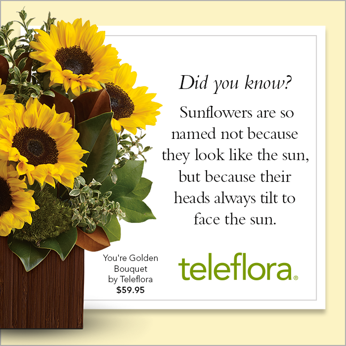 Shop for sunflowers and many more flower types at