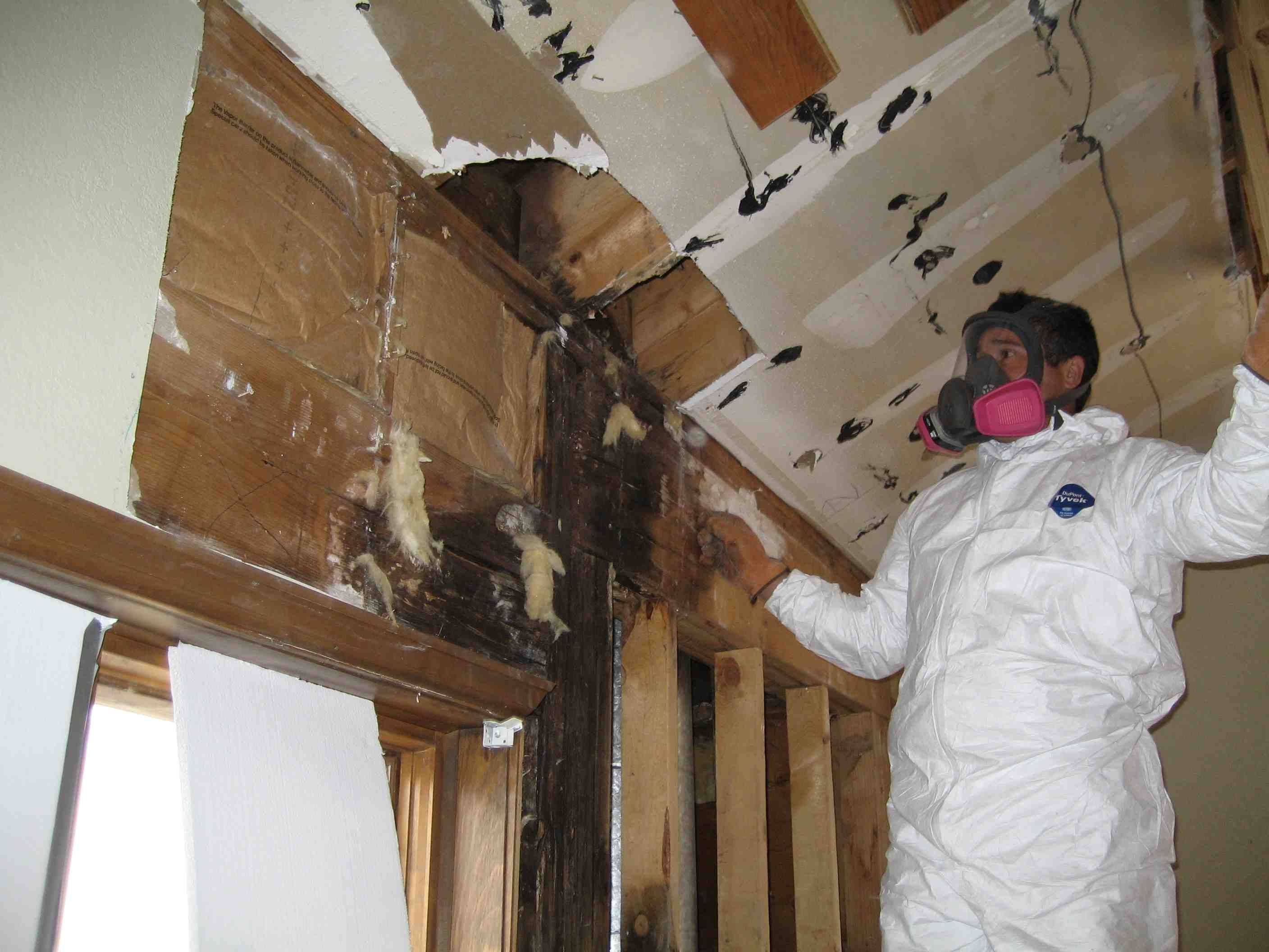 Black mold inspection cost - As Part Of The Typical Procedure Mold Remediation Professionals Shows Up At Your House In White Suits And Wearing Goggles Boots And Respirators