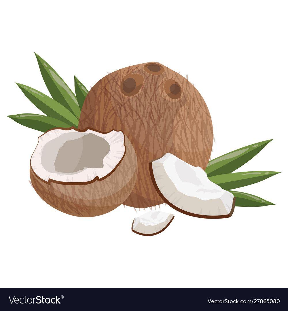 Cartoon Coconut Fresh Vitamin Fruit Juicy Sliced Vector Image On