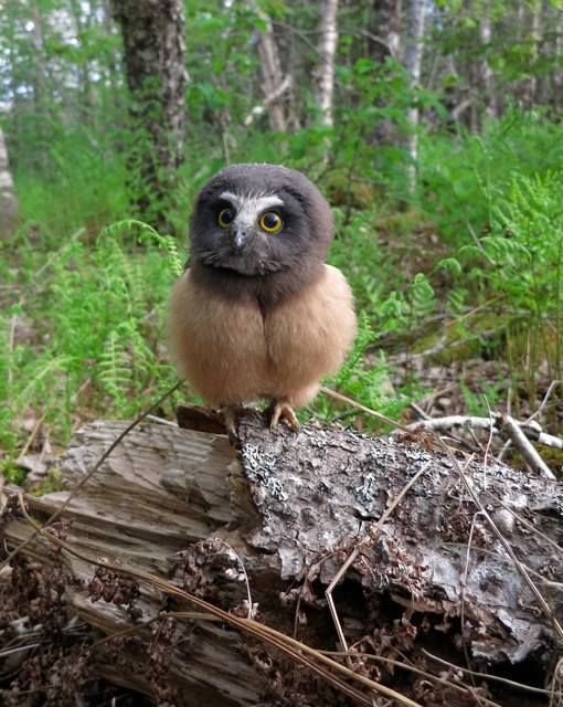 Hoooo are you looking at? What a sweet owl!