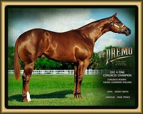 PF Premo. 2yo halter stallions. Congress and reserve congress halter stallion.