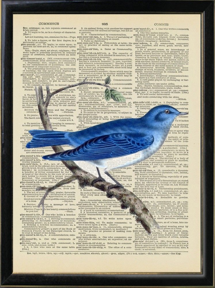 blue bird audubon vintage print on old book page 8x10 850 via etsy - Prints On Old Book Pages