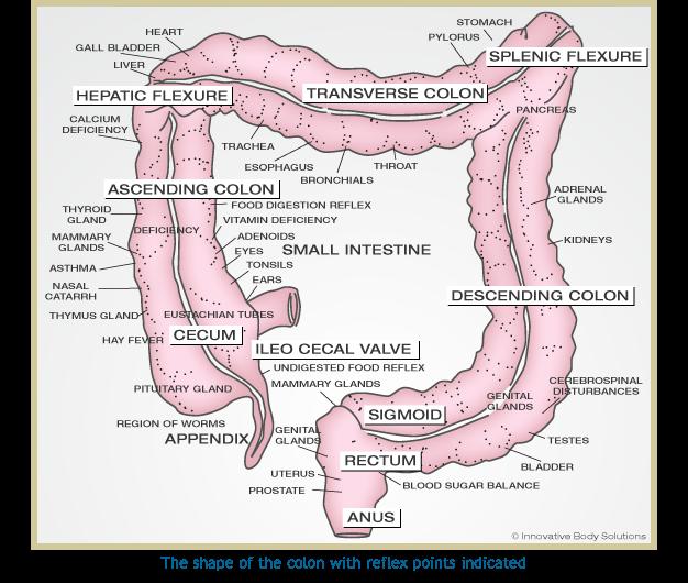 Colon Diagram Intestine Medical Pinterest Magnesium Oil
