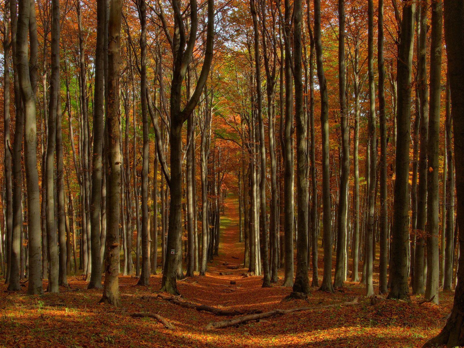 Awesome tree woods wallpaper desktop wallpaper download