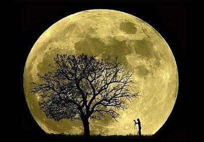 two things I love together....trees and the moon