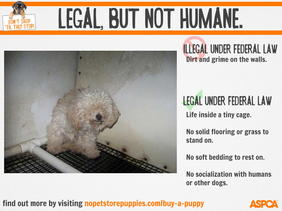 Buy Sell Maltese Puppies Online Https Www Dogspuppiesforsale Com Maltese Maltese Puppy Havanese Puppies Puppies