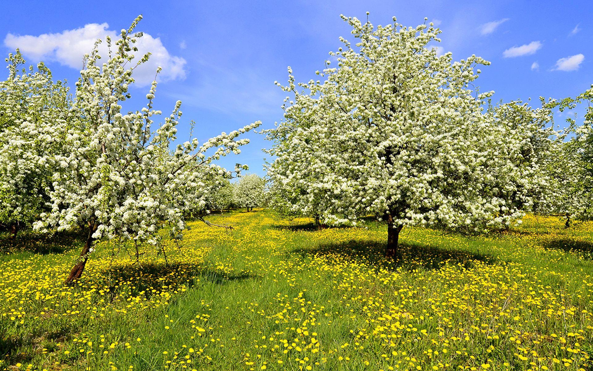 fotos von natur frühling löwenzahn gras blühende bäume