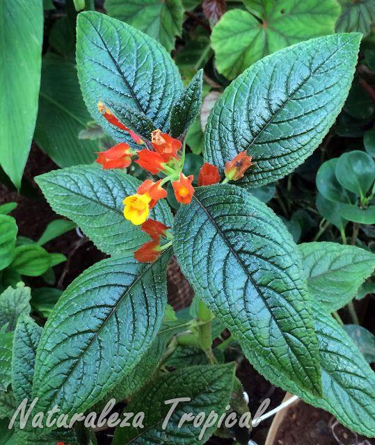Pin de naturaleza tropical en plantas ornamentales for Caracteristicas de las plantas ornamentales