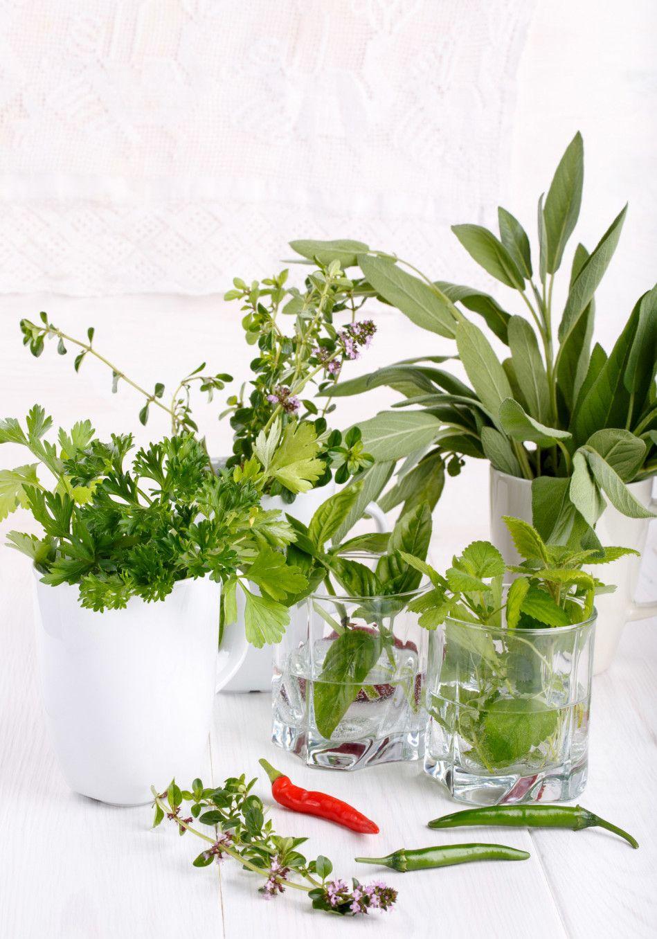 how do you store fresh cilantro in the fridge