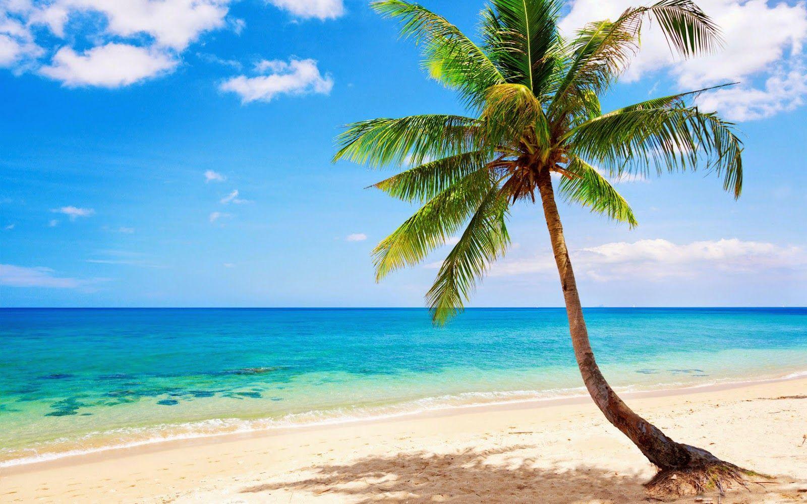 Sommer bilder mit insel, strand, zee in 2020 | Sommer