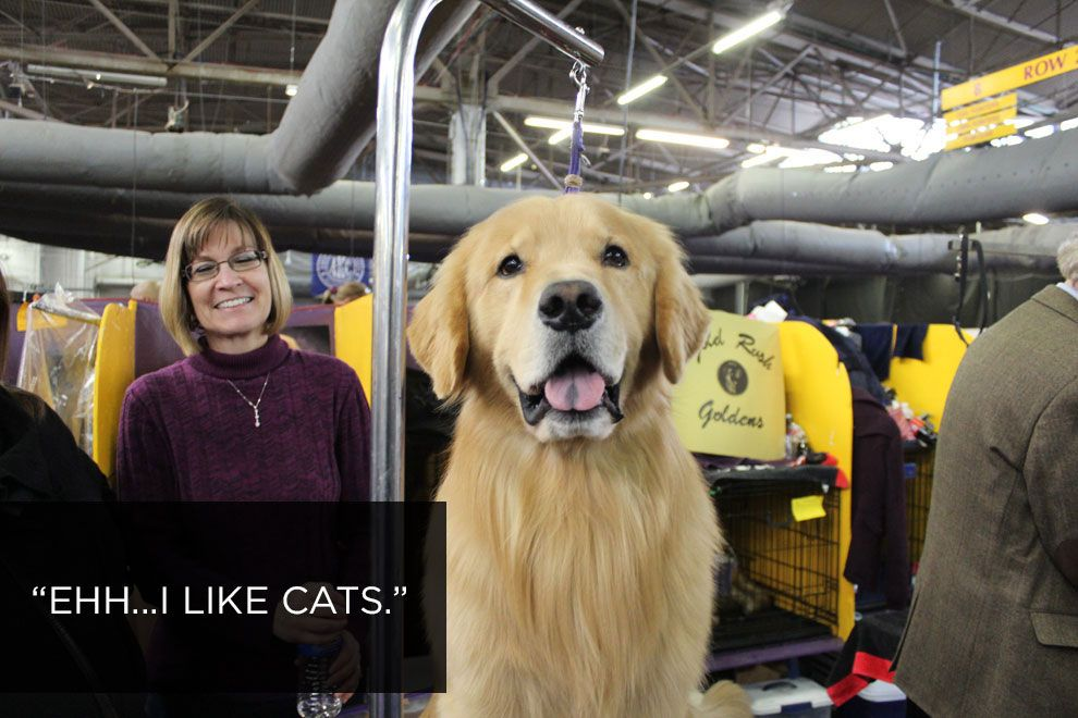 What 15 Handlers At The Westminster Dog Show Think Of Cats Dog