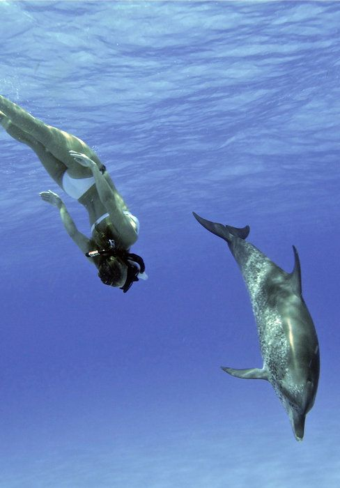 Free dive with dolphins.