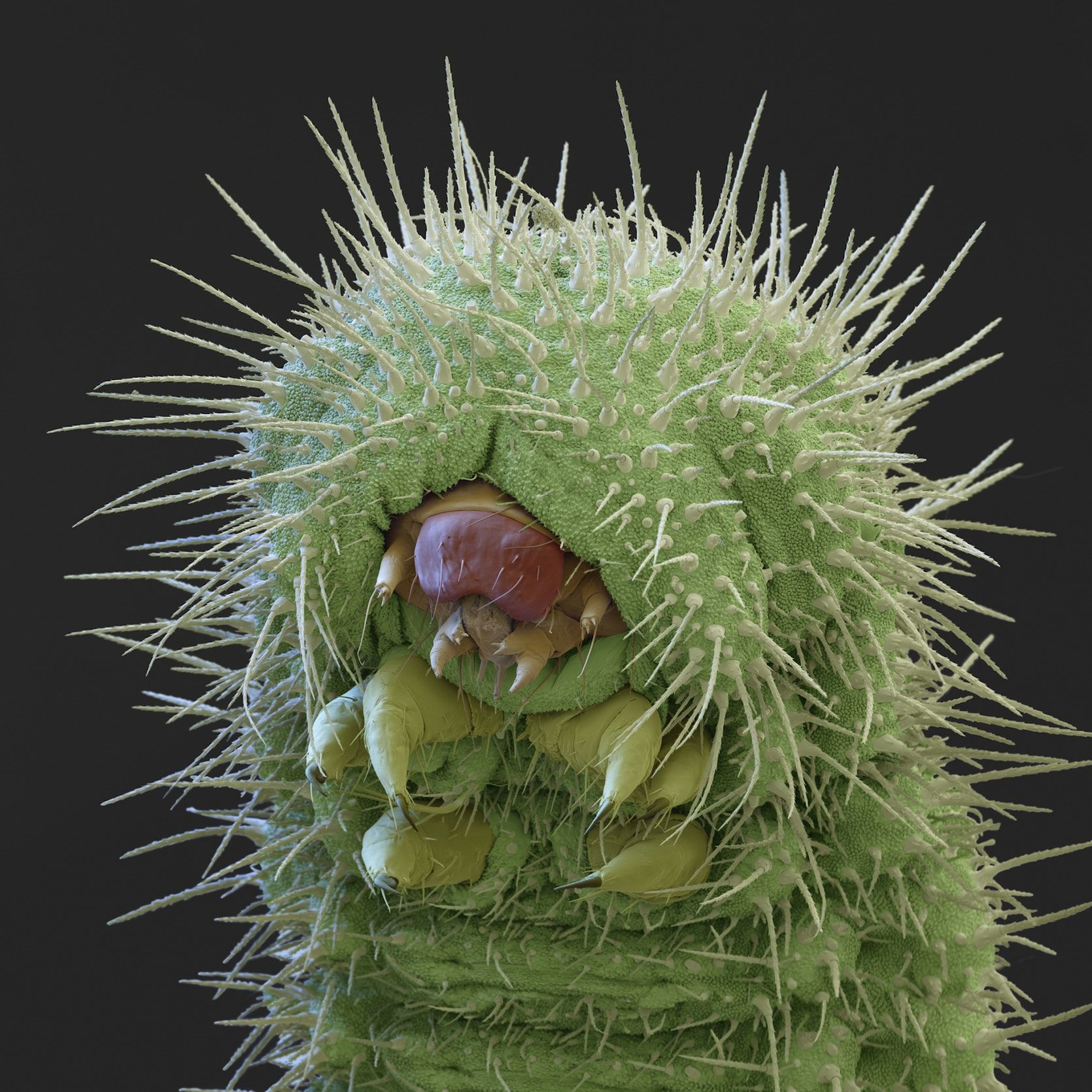 Micro Monsters Up Close And Personal Microscopic Photography
