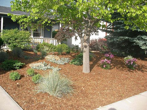 Mulch and plants covering whole yard xeriscape my yard for Zero landscape ideas