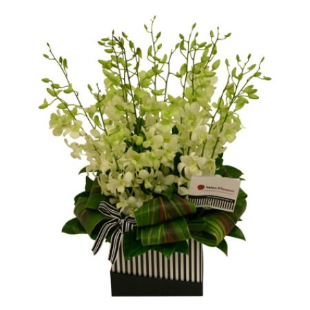 Rapture Boxed Flowers Orchids Church Flowers Orchid Arrangements