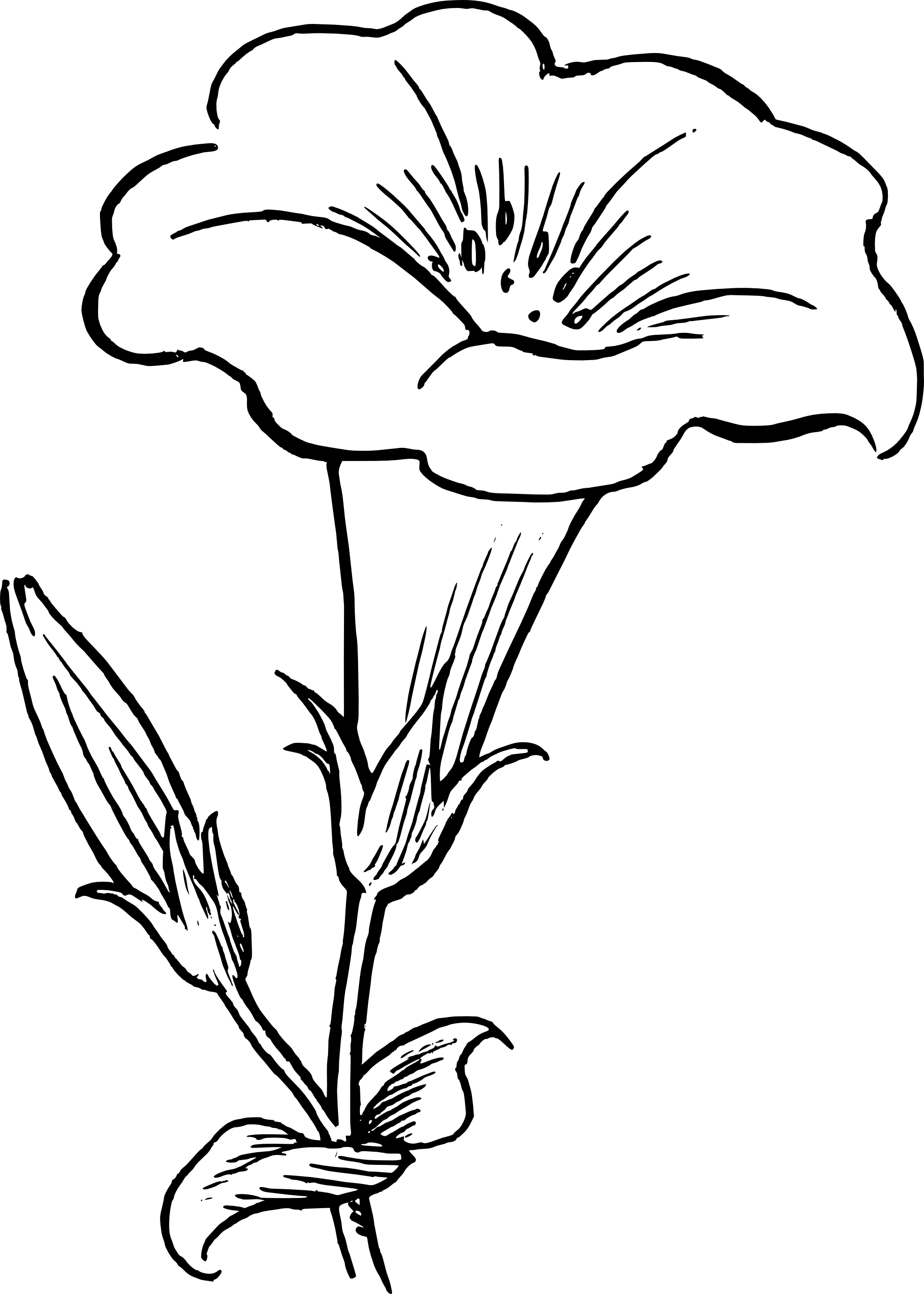 black and white flower drawing clipart panda free clipart
