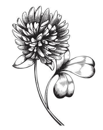 Clover Flower Irish Tattoos Irish Flower Tattoo Celtic Clover Tattoos