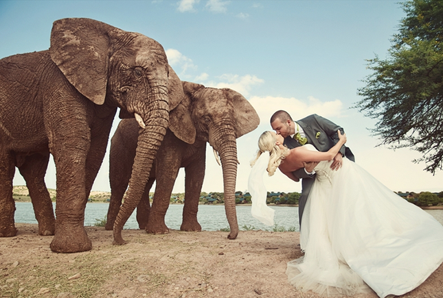 South Africa 10 Destination Wedding Locations To Escape In Winter Via Brit Co