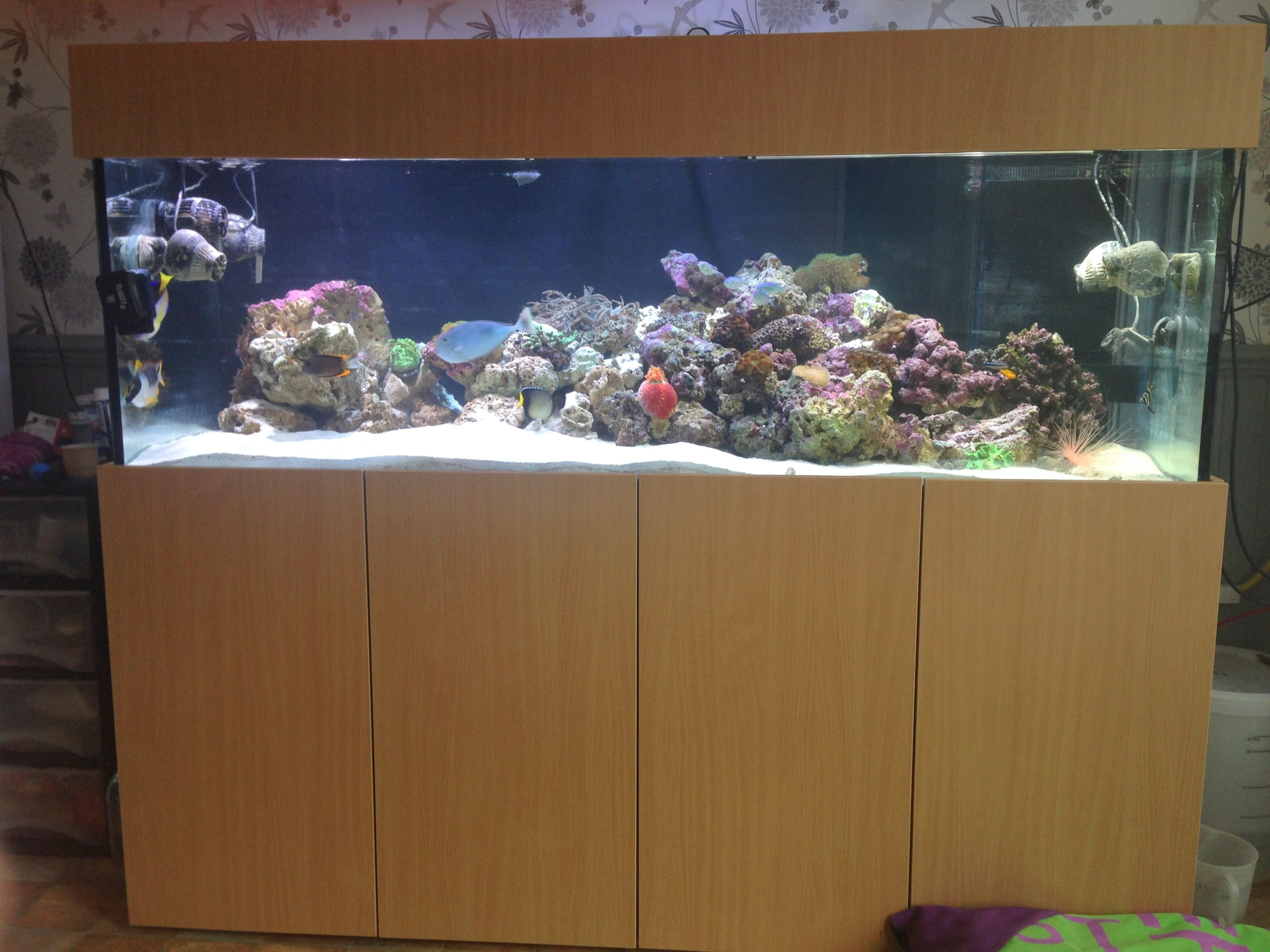 "Marine aquarium 72""x24""x24"" with sump tank 50""x18""x17"" Custom"