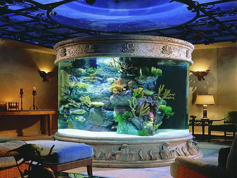 Large fish tank ideas for the house google search for Fish tank house