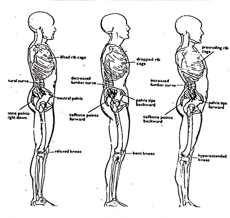 Your Missing Link - Muscle Balancing and Our Internal Organs ...