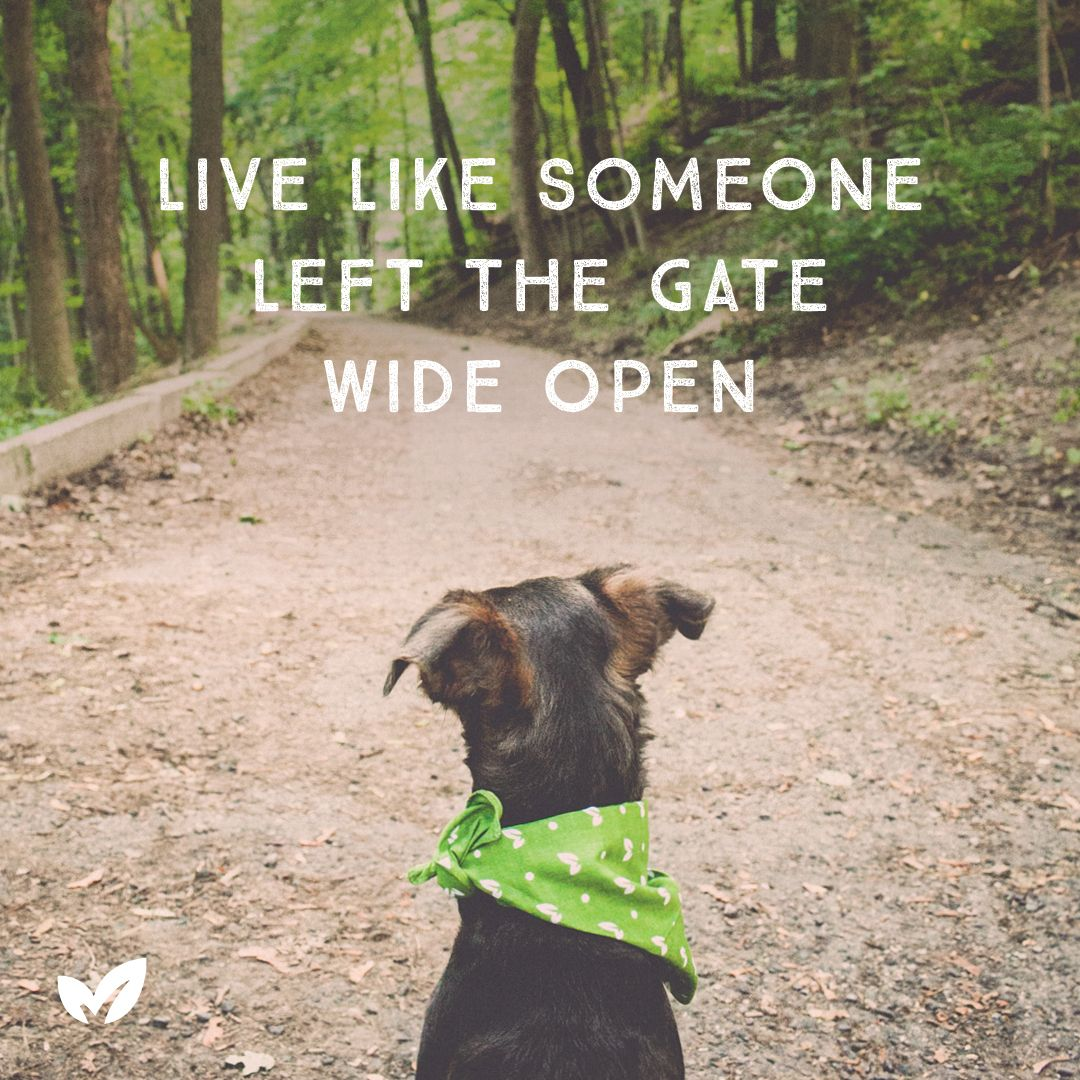 We absolutely love this quote! DogsLifeMag Dog quotes