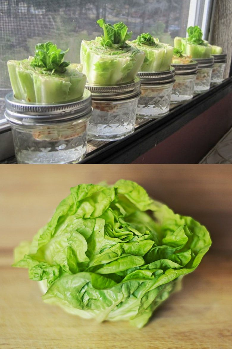 how to grow lettuce indoors with a grow light