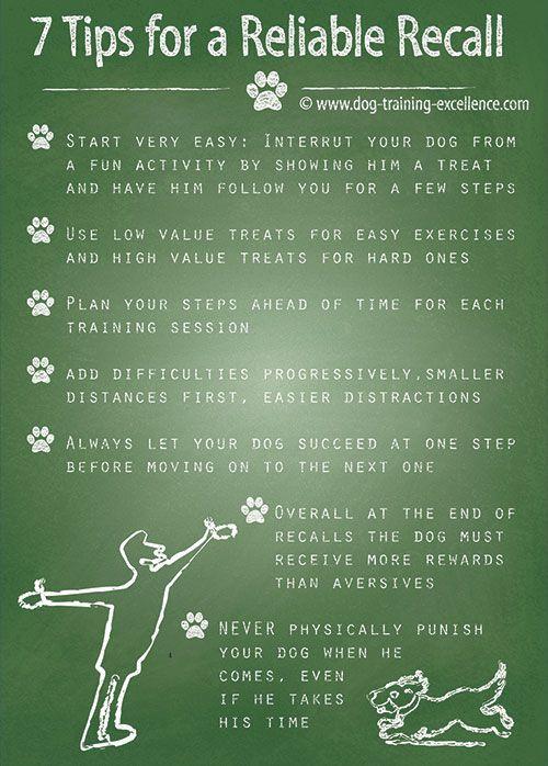 Reliable Dog Recall 7 Professional Tips Dog Recall Dog