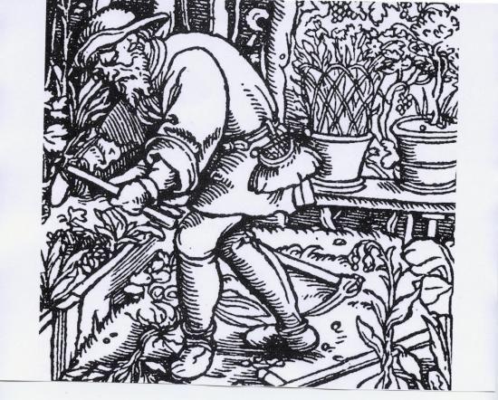 Gravure jardin medieval