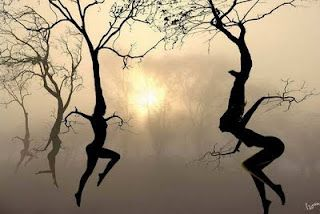 Dancing trees...how cool