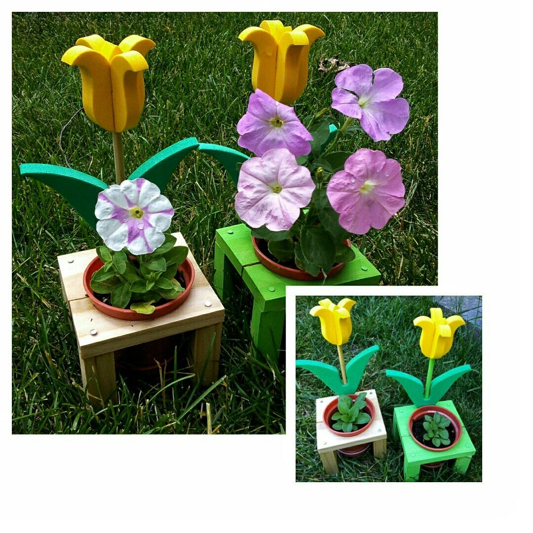 225 & 3x3 inches planter. Petunias flowers planted from seeds in ...